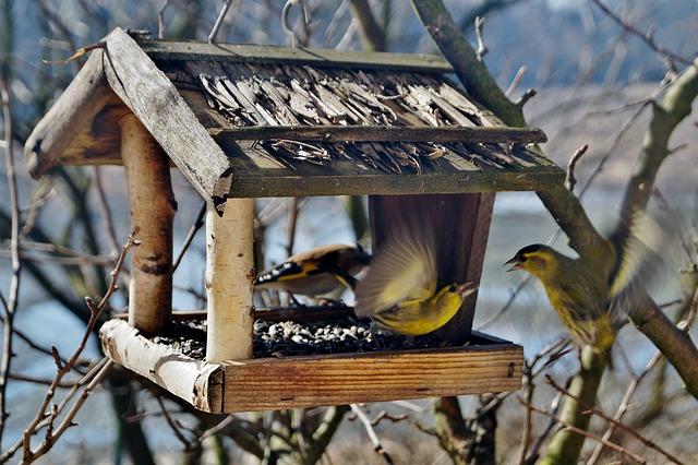 Московские орнитологи создадут карту кормовых зон птиц