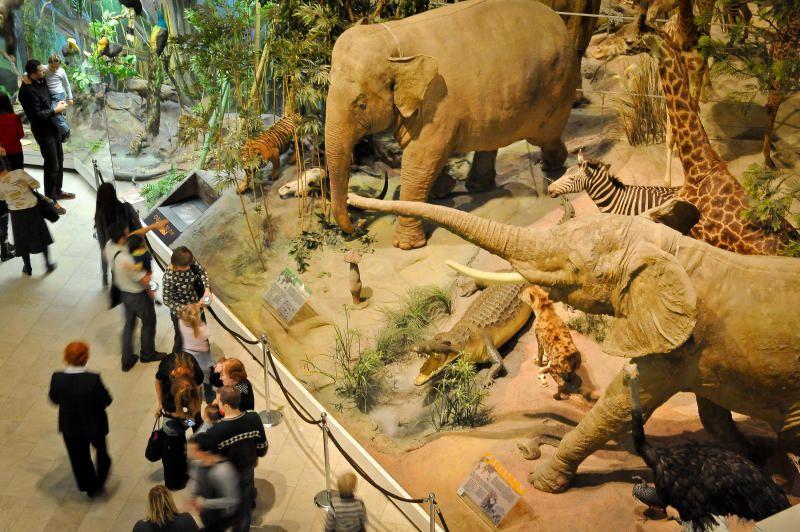 Жителей столицы пригласили отметить День матери в Дарвиновском музее