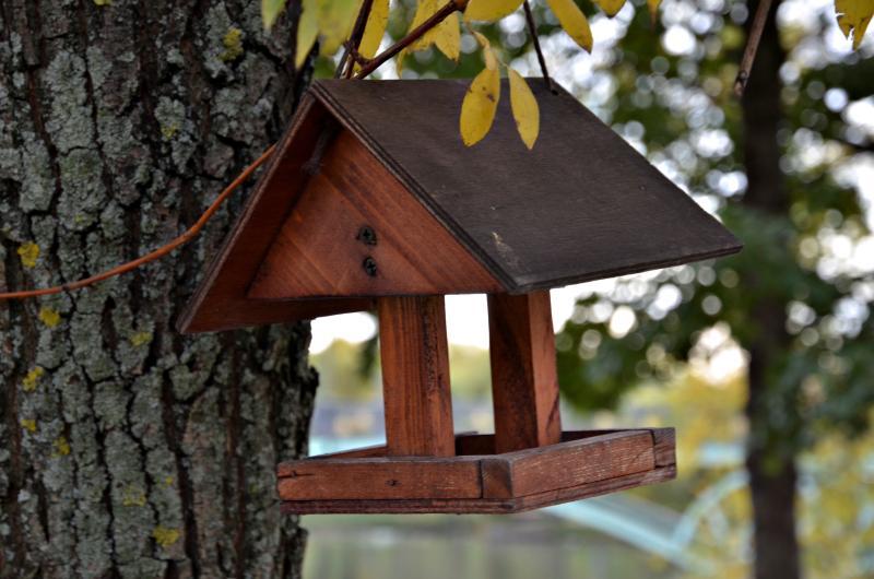 Акция «Покормите птиц зимой» стартует в столице