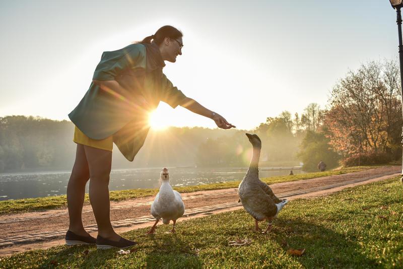 Лебеди из «Царицыно» проведут зиму на зооферме