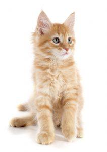29 ноября 2018 года. Пенсионерка Елена Извекова рада, что у бездомных кошек появился теплый дом, который скоро станет еще и красивым. Она каждый день приходит покормить животных. Фото: SHUTTERSTOCK