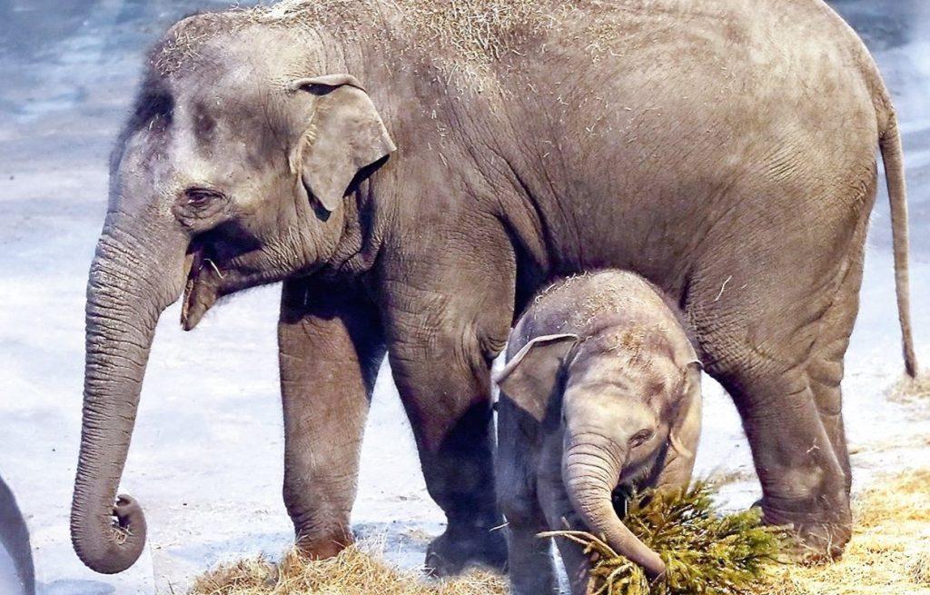 Стартует конкурс имен для трех слонят «Уголка дедушки Дурова»