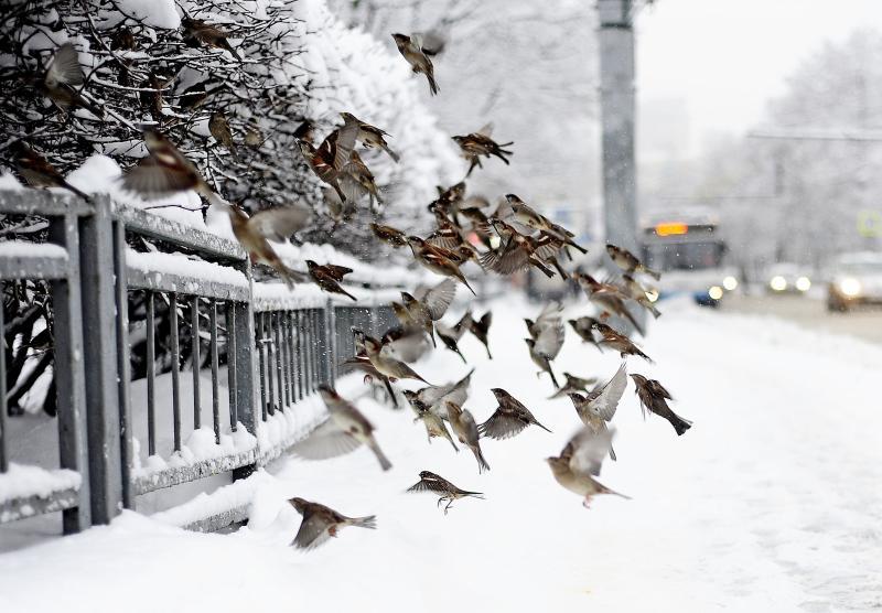 Атмосферное давление в Москве превысит норму на 15 единиц