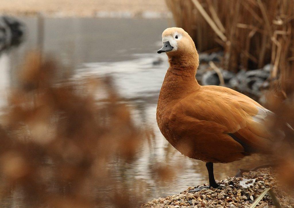 Орнитологи рассказали о вреде черного хлеба для птиц