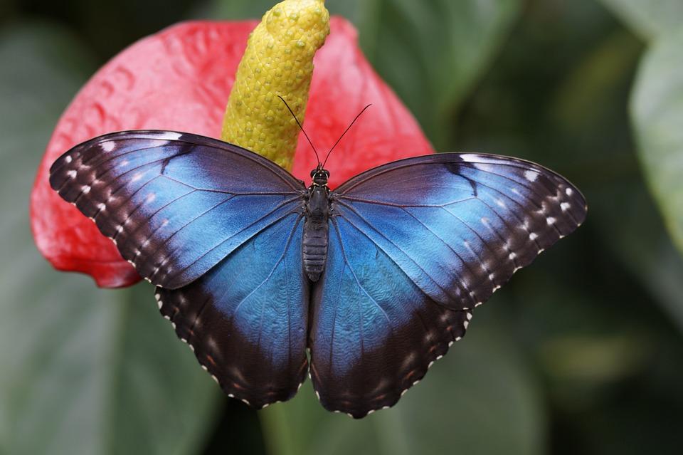 Новый год подарит Московскому зоопарку 365 ярких бабочек