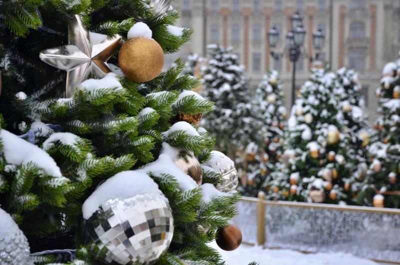 Жители юга смогут сдать елки после праздников в специальные пункты