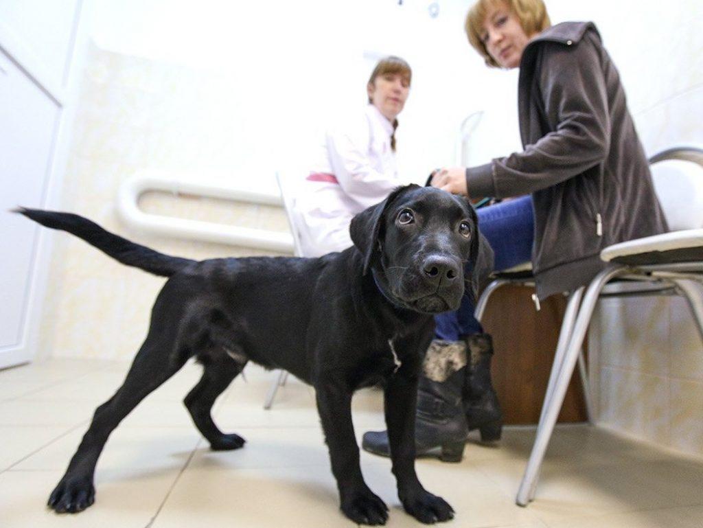 Москвичи смогут записать своих питомцев к ветеринару не выходя из дома. Фото: сайт мэра Москвы