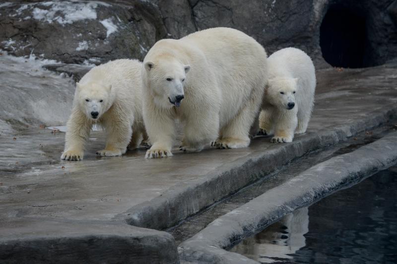 Гимн к 115-летию Московского зоопарка презентуют летом