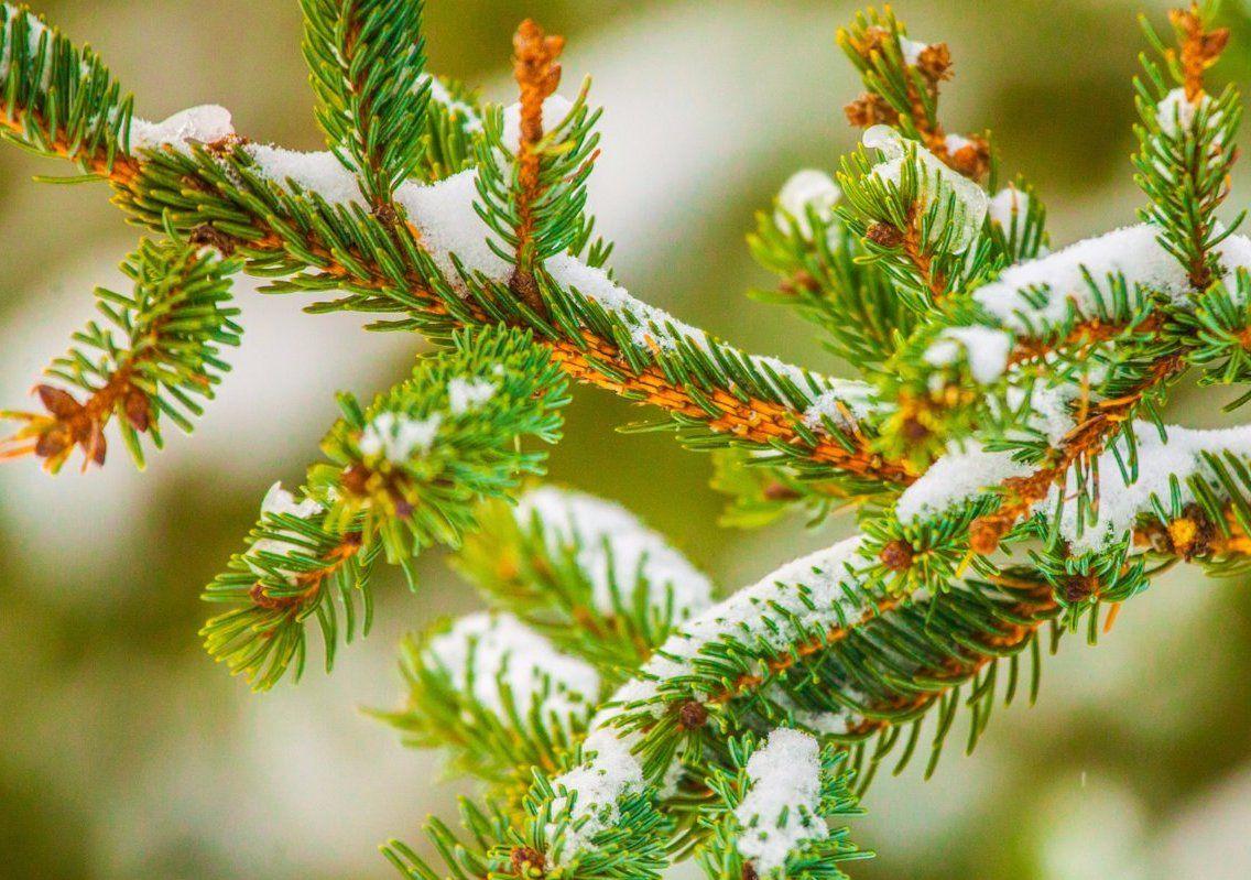 Более 45 пунктов приема елок на переработку организовали на юге