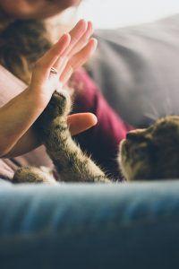 Следите, какой лапой переступила порог кошка: если левой, поздравляем, все сбудется. Фото: pixabay