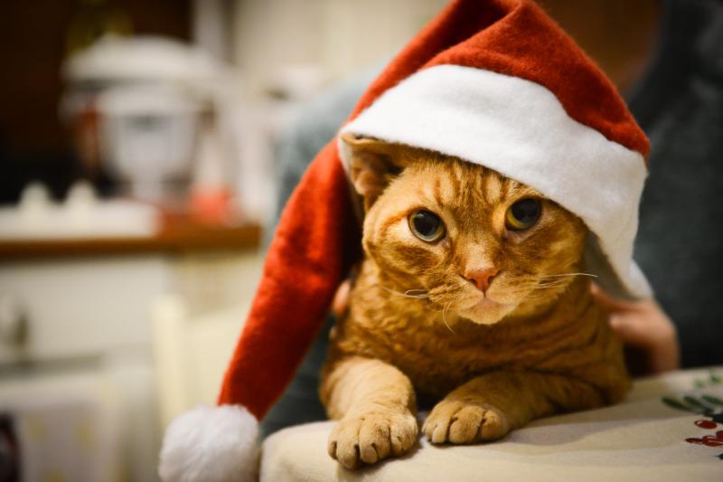 Подарки для любимцев, или чем порадовать питомца в новогодние праздники