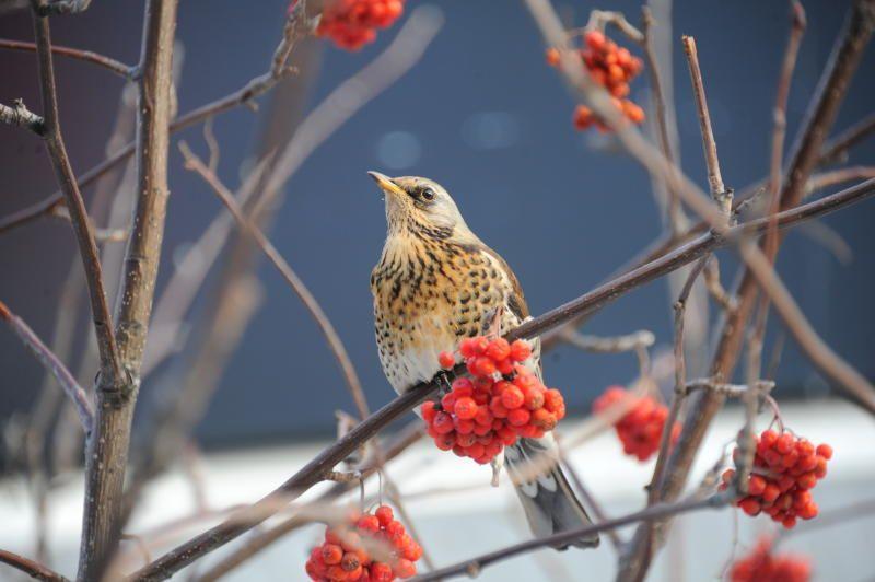 Жителей юга пригласили присоединиться к акции «Покорми птиц зимой»