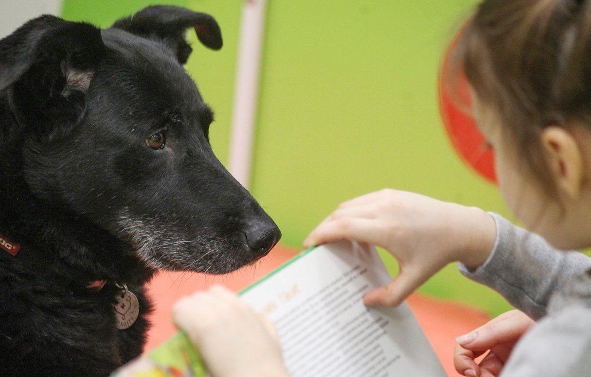 Библиотечная собака Найда поможет детям научиться читать