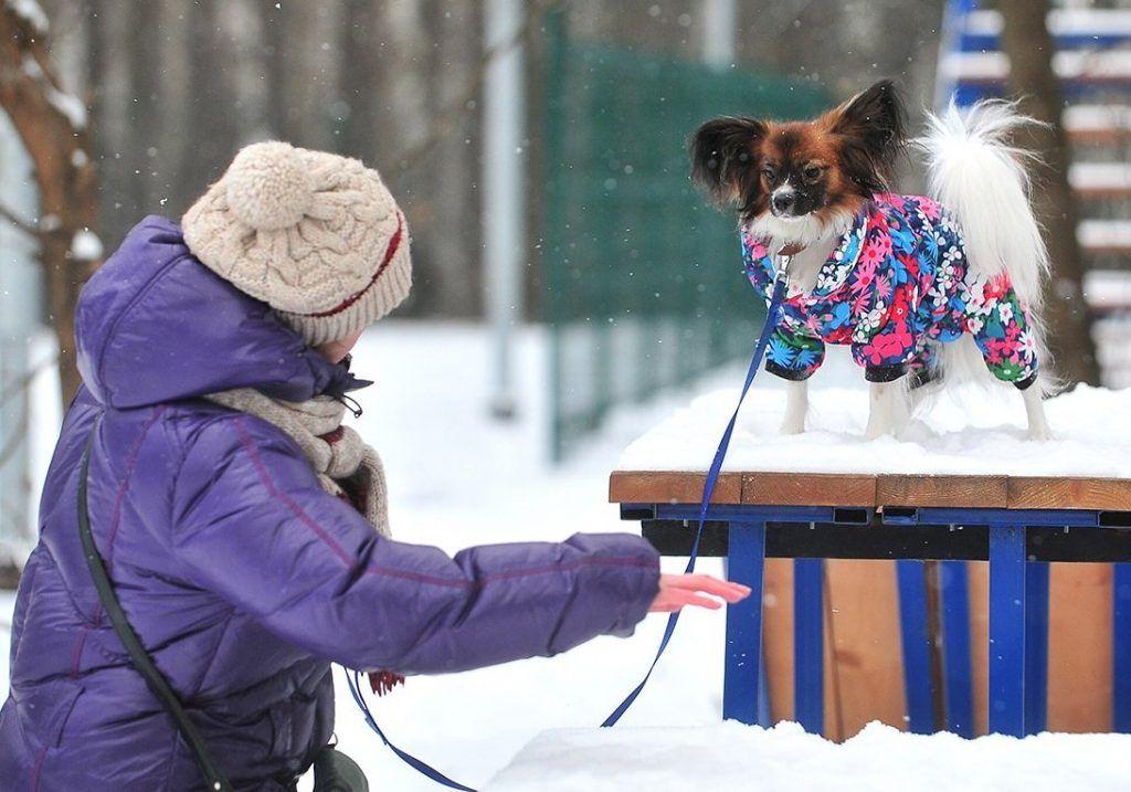 Свыше 1600 горожан оформили электронные заявки на посещение ветеринара. Фото: сайт мэра Москвы