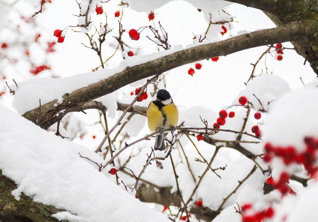День снега отметят в Бирюлевском дендропарке