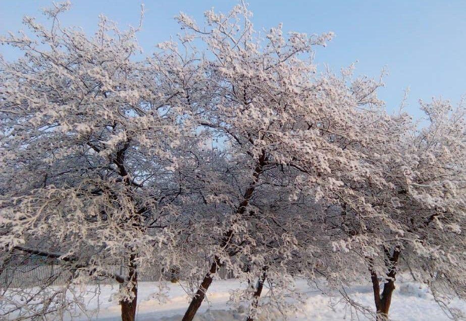 Народный корреспондент побывал в зимнем парке «Садовники»