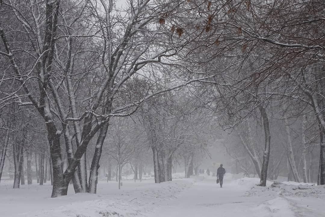 Снежная вьюга застала народного корреспондента на аллее