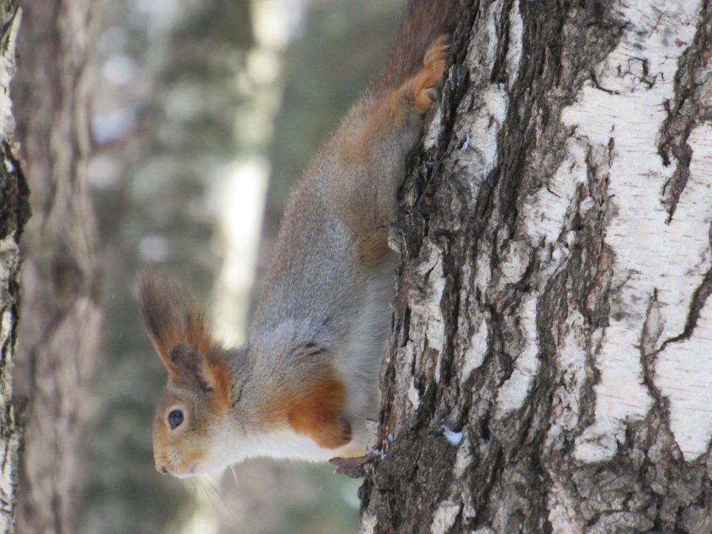 Оказывается, в «Царицыно» водится много белок, уток, дятлов, птиц соколиной породы. Фото: пресс-служба музея-заповедника «Царицыно»