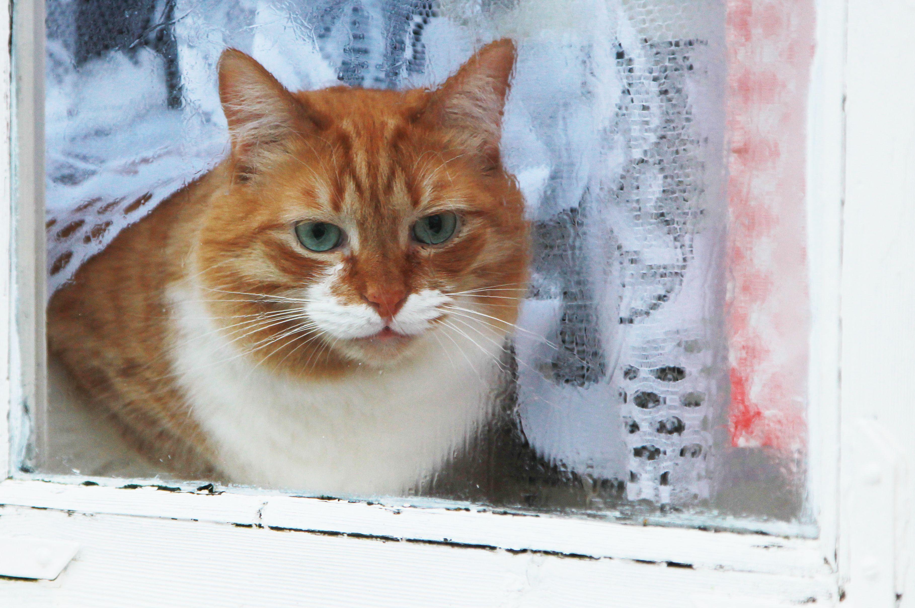 Московским пенсионерам предложили бесплатно стерилизовать кошек