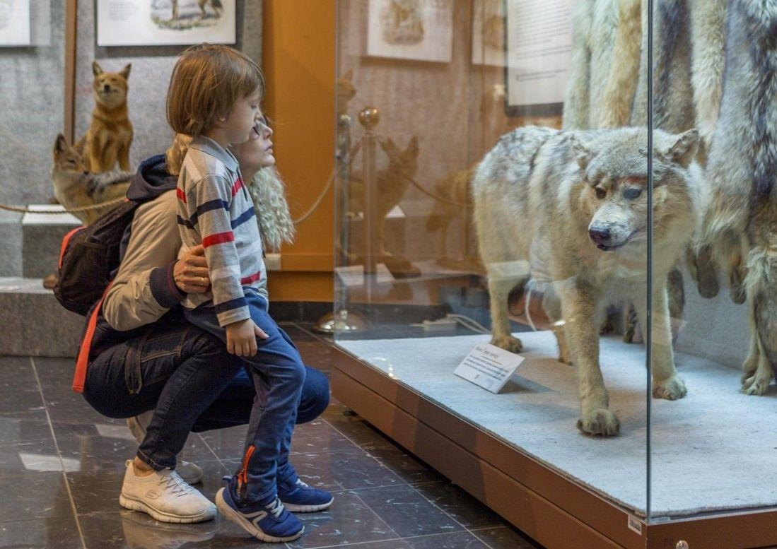 Историю появления самых романтичных экспонатов рассказали в Дарвиновском музее