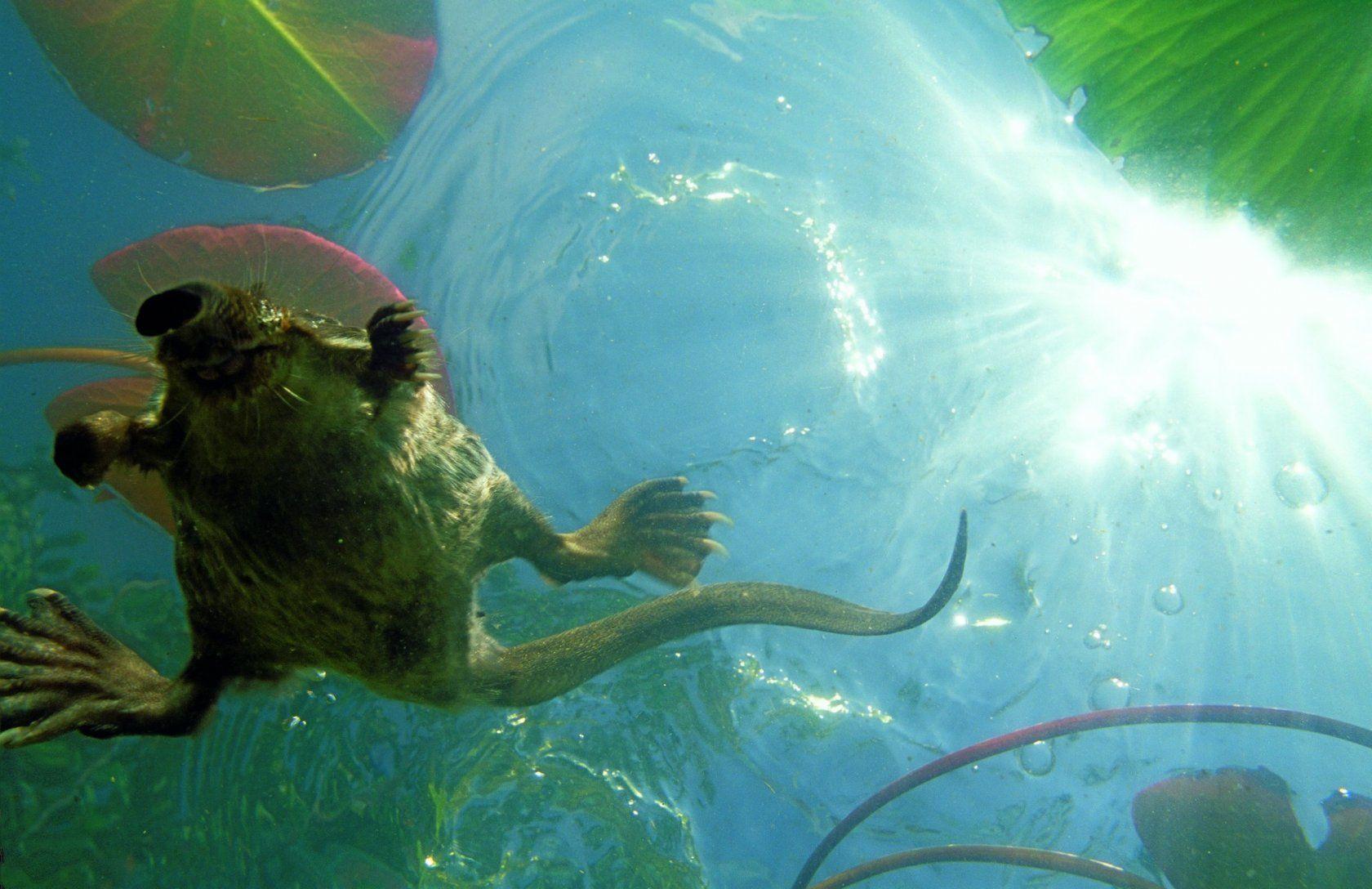 Знакомьтесь — заповедники: в Дарвиновском музее покажут уникальные кадры российской природы