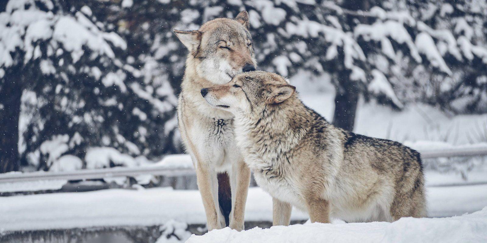 Московский зоопарк пригласил на Валентинов день