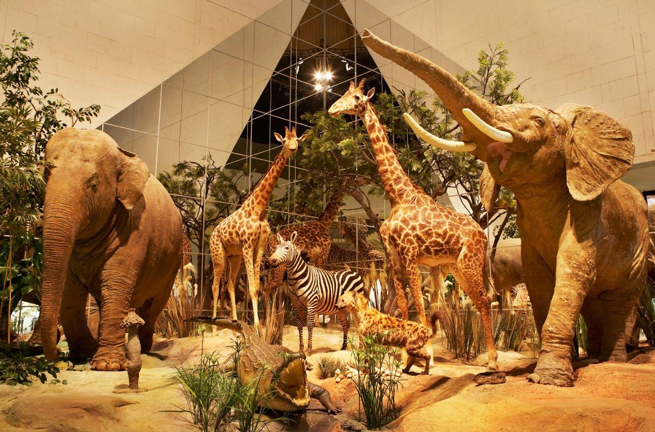 Юных горожан пригласили провести весенниеканикулы в Дарвиновском музее