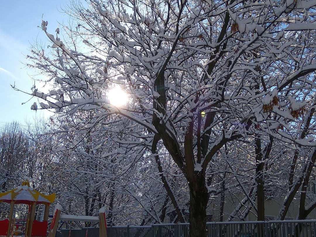 Народный корреспондент встретил морозное солнечное утро на юге