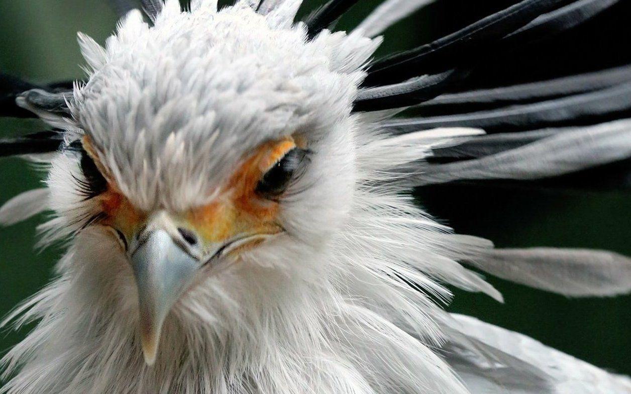 Москвичей пригласили понаблюдать за птицами в Бирюлевском дендропарке