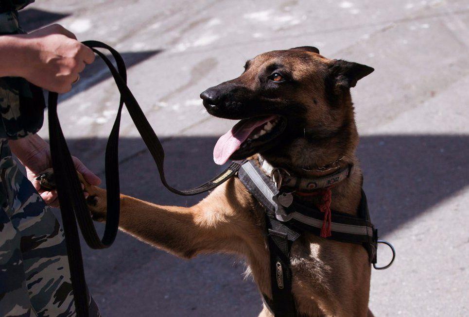 Собак-поводырей обучат для сопровождения в московском метро