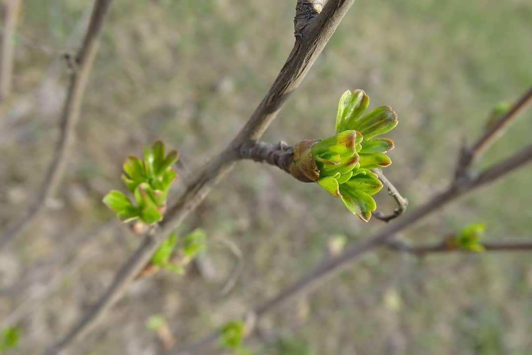 Народный корреспондент отметил стремительный рост листьев на деревьях