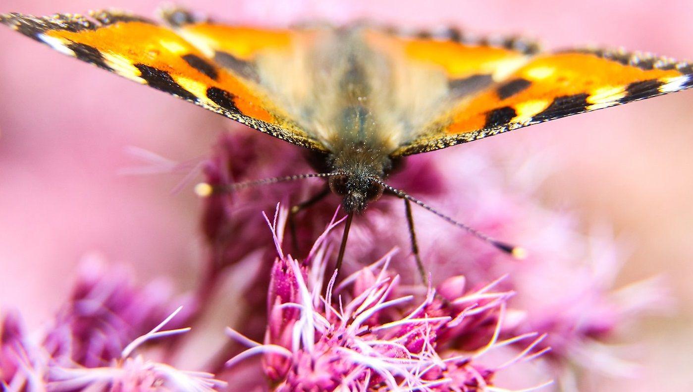 Бабочки и божьи коровки: обитатели столичных парков проснулись