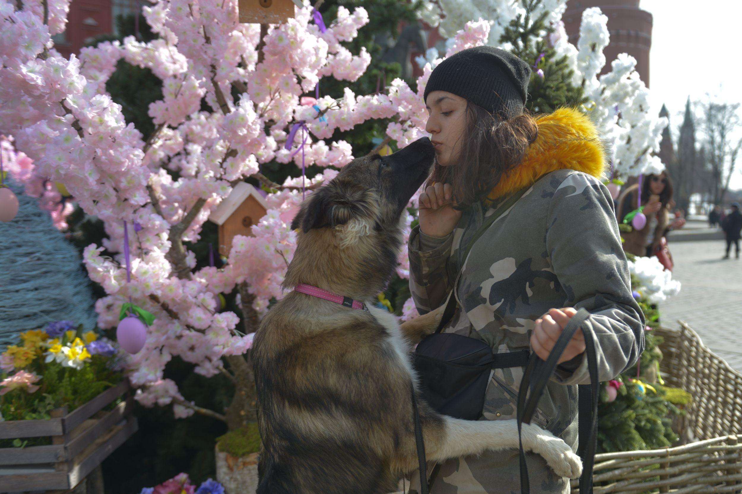 Почти 350 кошек и собак примут участие в «Пасхальном даре»