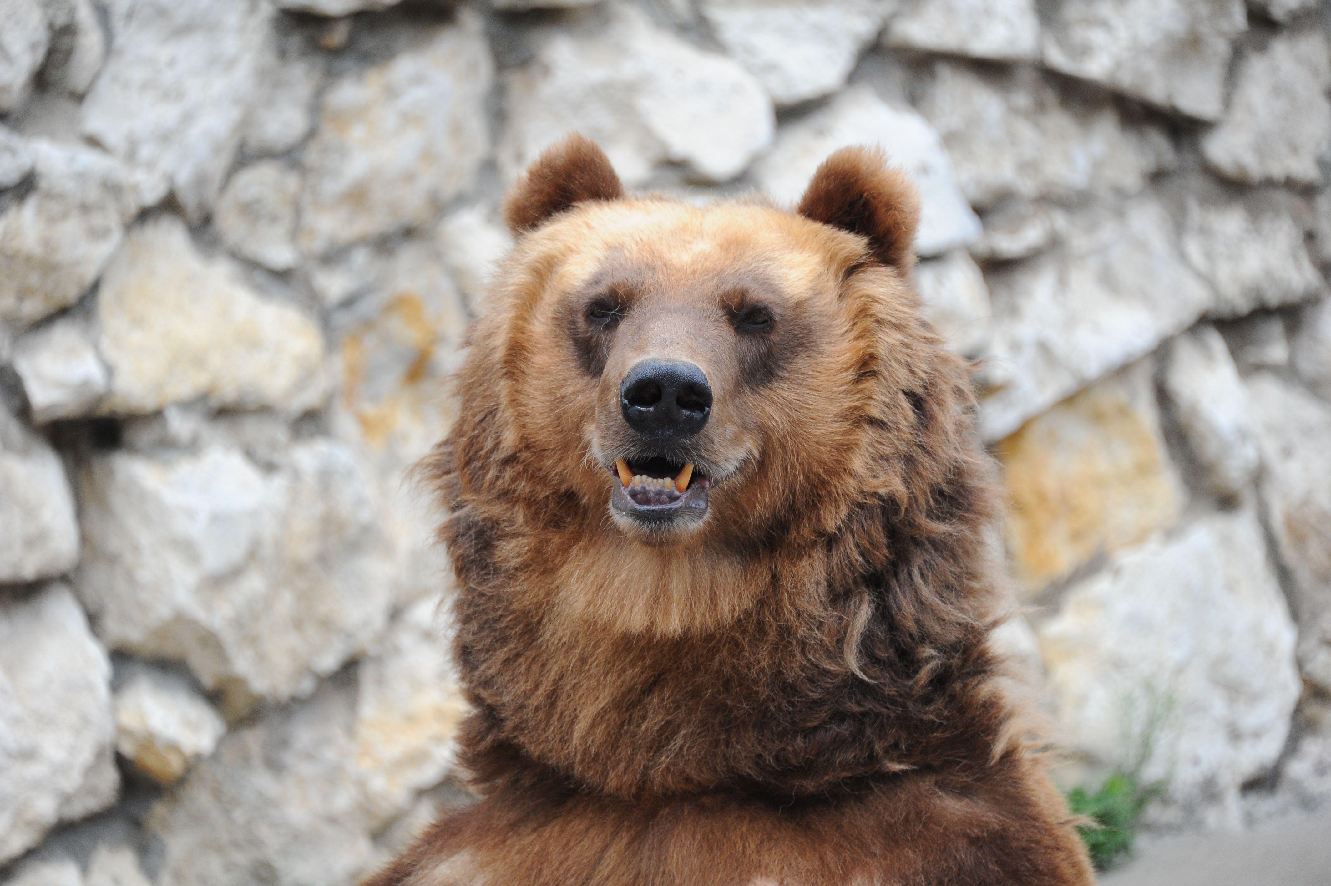 Три медведя Московского зоопарка вышли из спячки