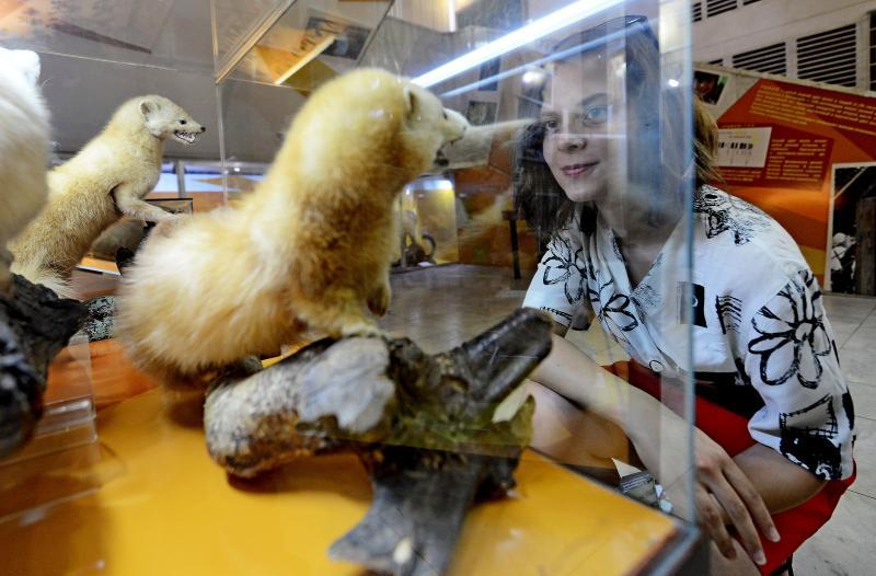 Горожане смогут изготовить сувениры в виде пушистых домашних животных в Дарвиновском музее
