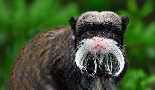 Жители юга узнают о стильных бородачах в мире животных