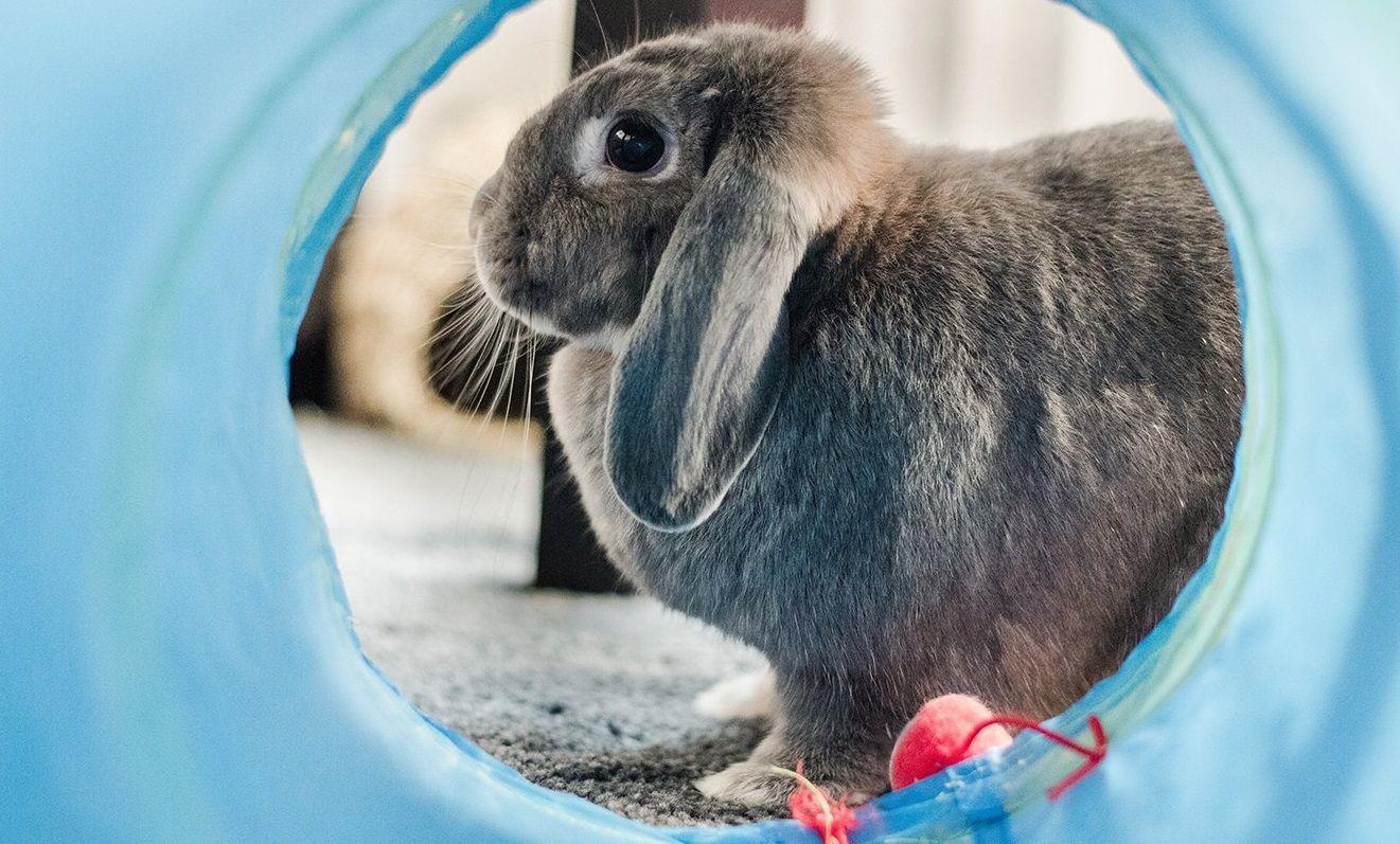 Владельцы экзотических домашних животных смогут записаться на прием к ветеринару онлайн