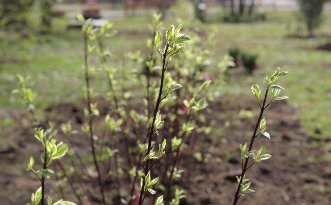 Цветники в Братеевском каскадном парке приведут в порядок