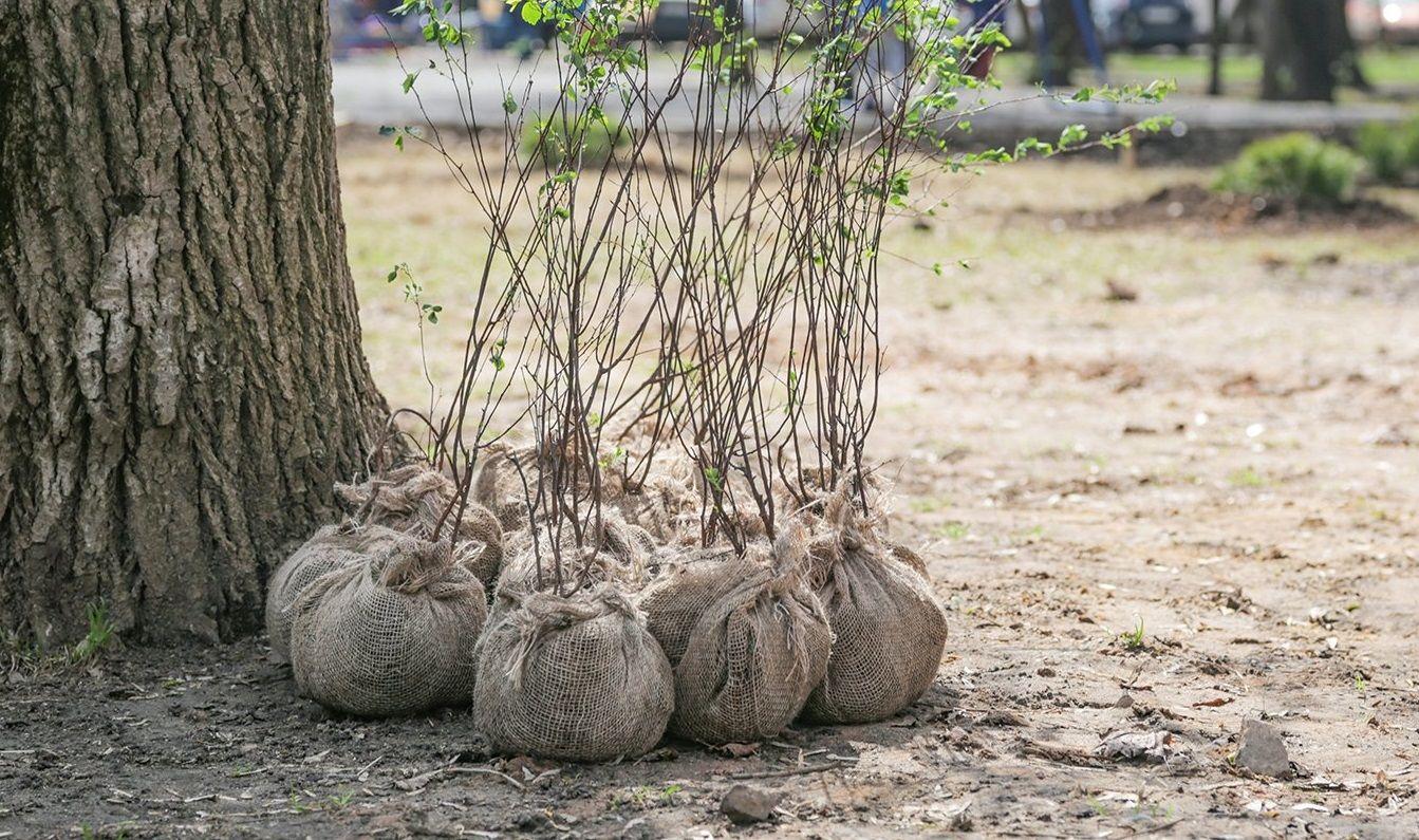 Десять деревьев высадят на Нагатинской набережной. Фото: сайт мэра Москвы
