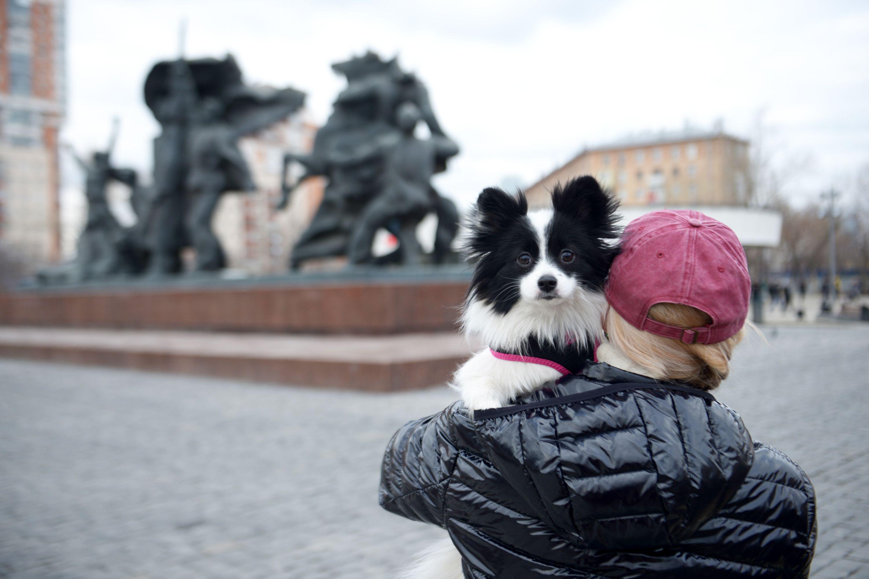 Собаки переходят в разряд кошек у москвичей