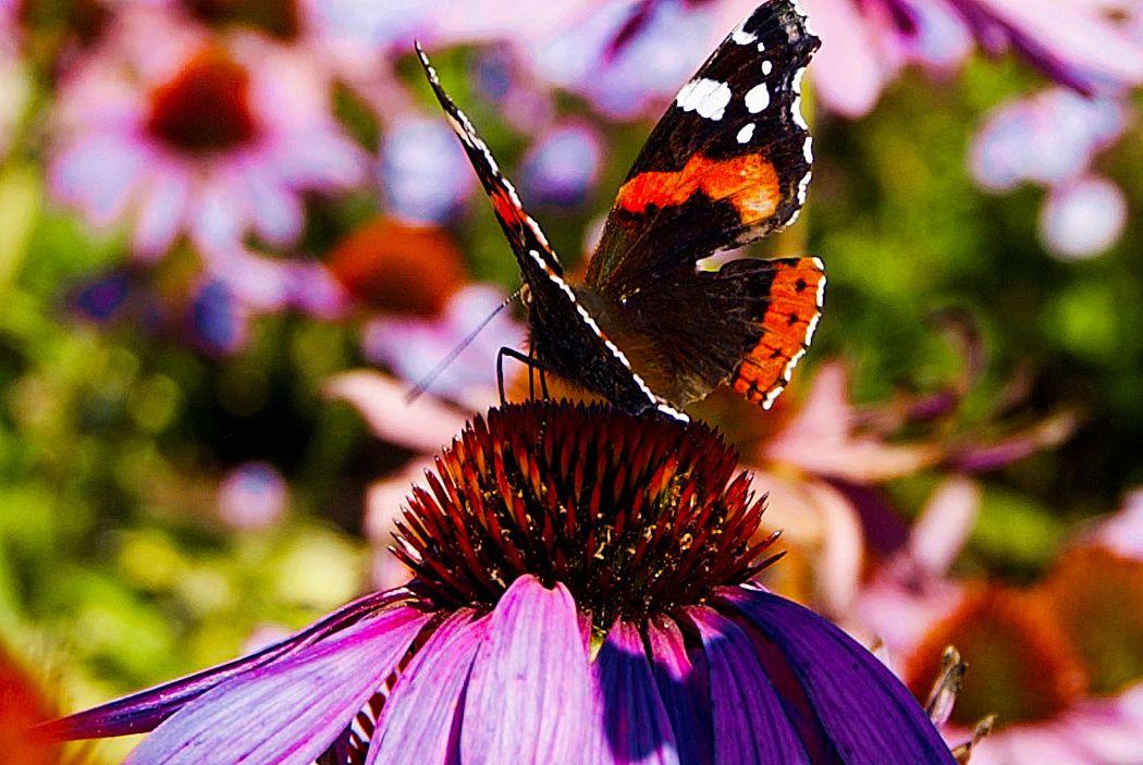 Московским пенсионеркам предложили взять шефство над бабочками