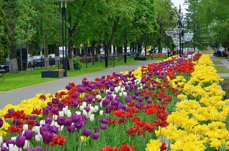 Более десяти миллионов цветов украсят Москву
