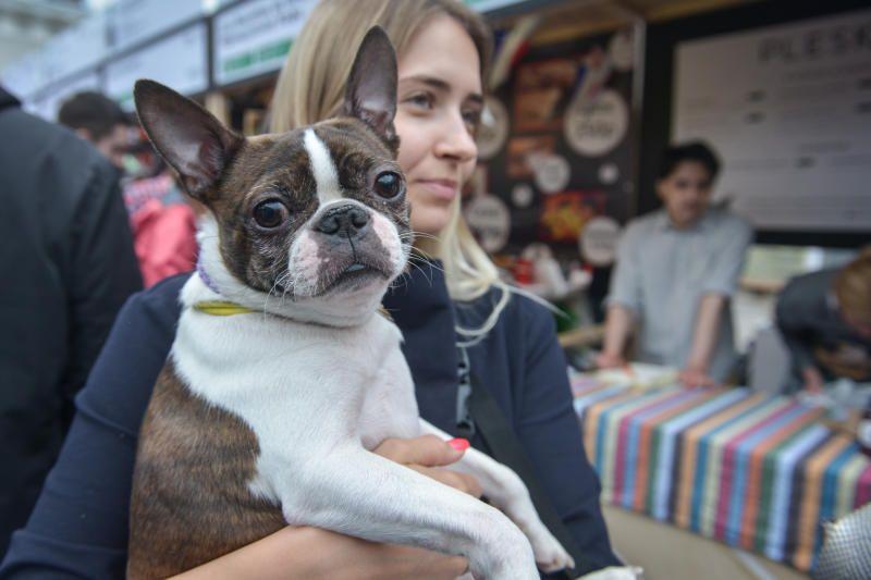 Около 150 домашних животных приютили в рамках «Недели добра»