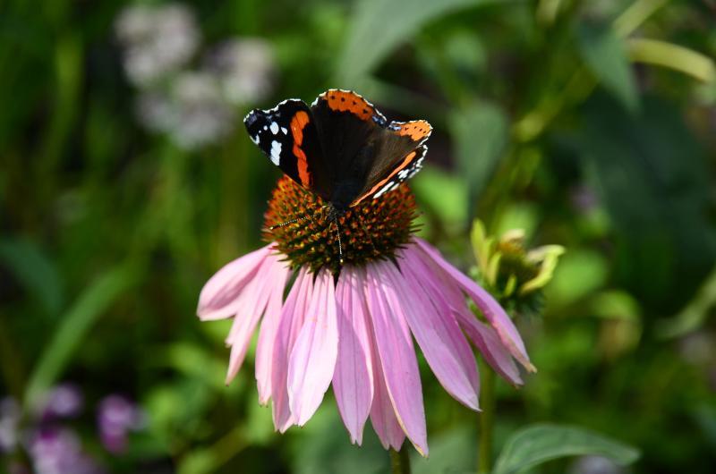 Петунии и бегонии: какие летние цветы украсят Зябликово