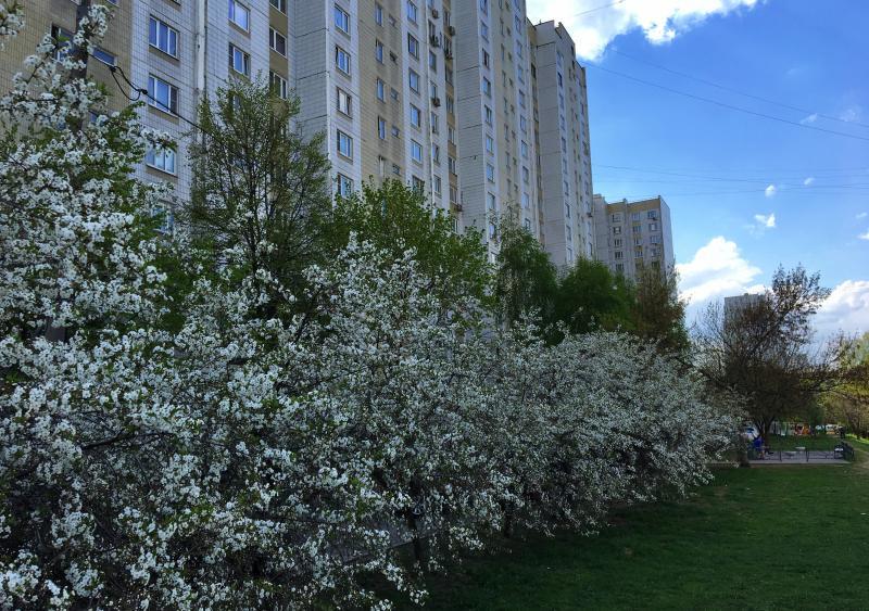 Четыре жилых дома отремонтируют в Бирюлеве Западном