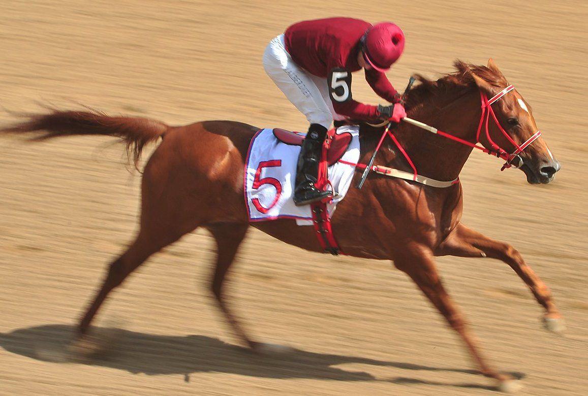 Изящество и драйв: масштабные конные соревнования состоятся в «Битце»