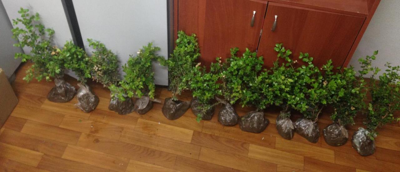 В Южном округе Москвы полицейский задержал подозреваемую в краже декоративных растений