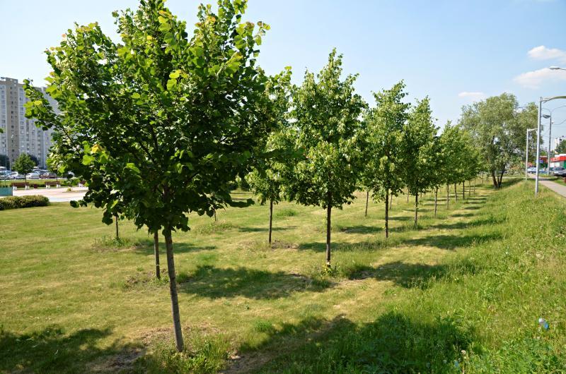 Работы по озеленению запланировали провести в районе до конца лета