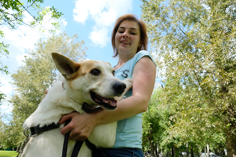 Московские ветеринары дали рекомендации по уходу за собаками
