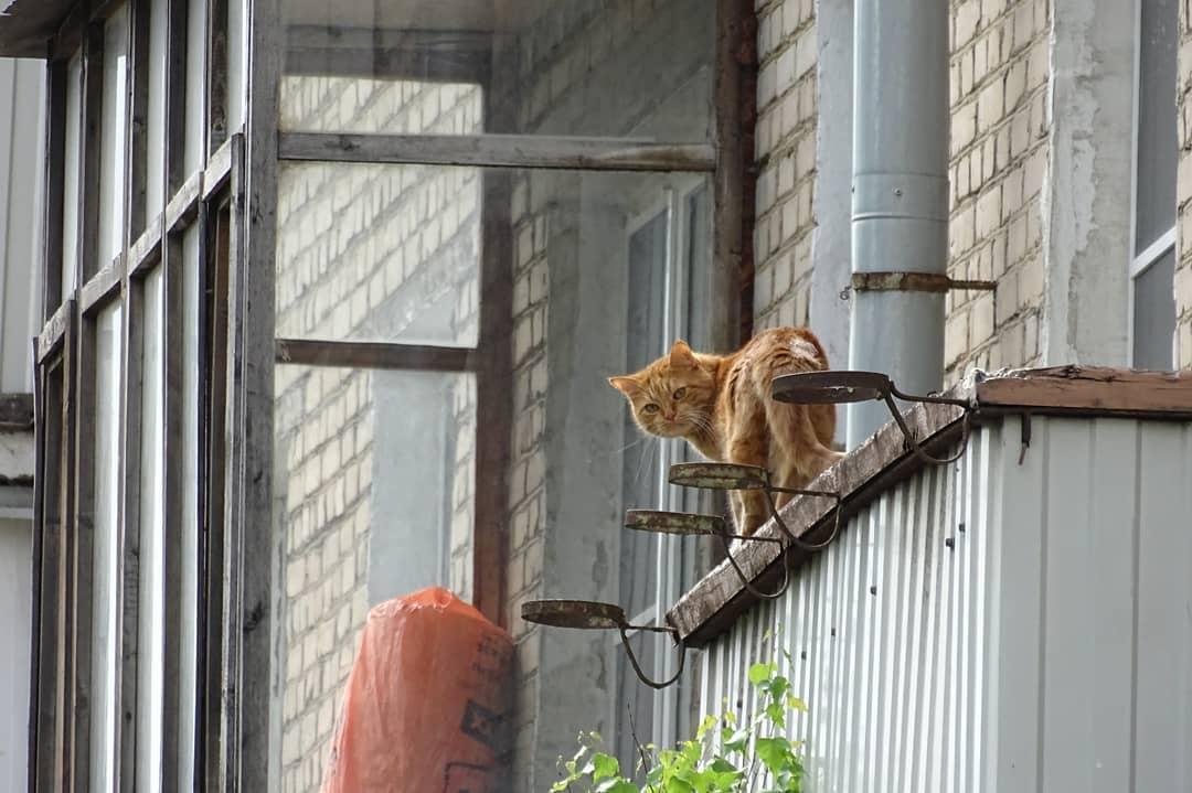 Каширский кот: народный корреспондент посвятил стихотворение питомцу